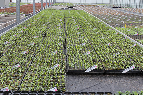 Plants growing at Direct2Grower, Ipswich, Suffolk, UK